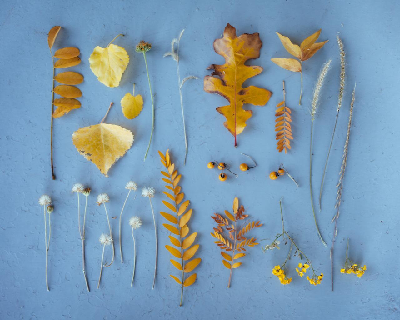emily-blincoe-11-photos-instantanees-feuilles