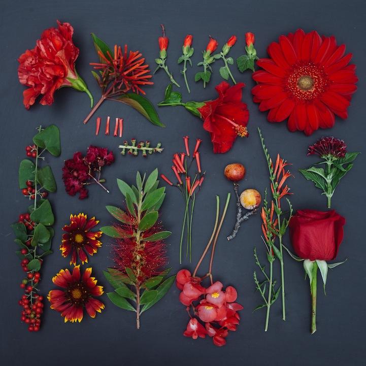 emily-blincoe-15-photos-instantanees-fleurs