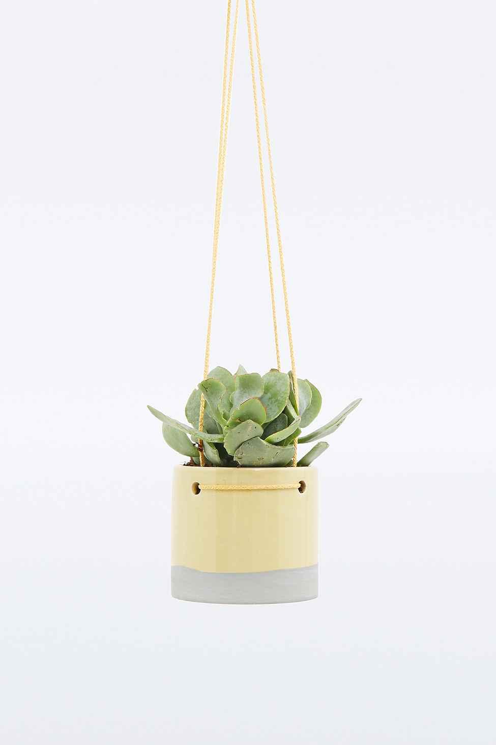 jardini res suspendre et terrariums vintages pour plantes d 39 int rieurs. Black Bedroom Furniture Sets. Home Design Ideas